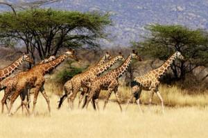 Класическа обиколка на Кения