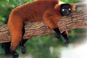 Мадагаскар - приключения из Червения остров